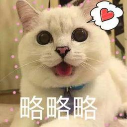 猫咪表情包 萌猫可爱表情带字的图片