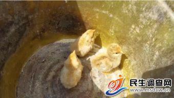 素可泰圆叶立枝山乌龟-鹤壁市   佛头山   旅游生态园,探寻时,有小米大豆肥硕,伴着孔雀的...