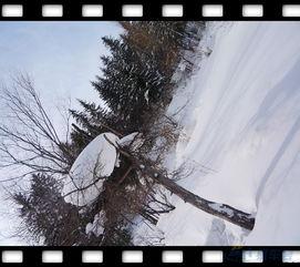 ...滨观冰灯 雪乡穿越归来照片 -驴行户外社区