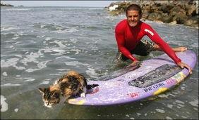 秘鲁冲浪猫兴风作浪