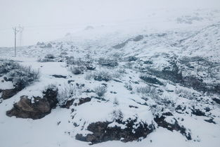 始就是白茫茫的一片,天空中飘着雪!   下午六点多的时候终于到达   ...
