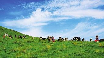 ...国新疆乌鲁木齐南山牧场一日游