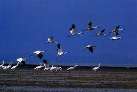 鄱阳湖候鸟-鄱湖