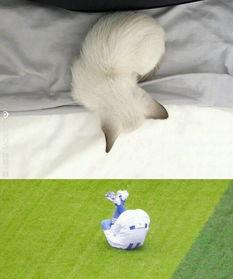 欢猫了,上次和辞欢一起养过一只,然后因为生病而去世了,自己特自...