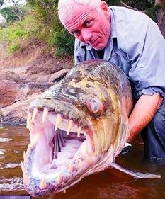 南山兵哥大长茎-英国垂钓者杰里米・韦德日前在非洲的刚果河流域捕获了一条巨型食人...