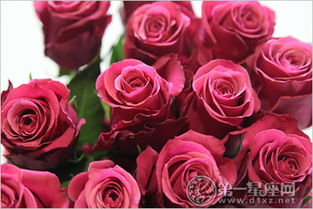 永生花的花语,不同朵数永生花的寓意