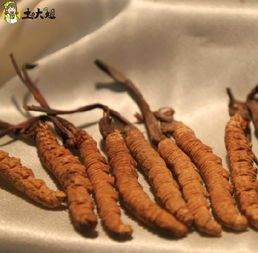 冬虫夏草怎么吃最好 虫草的食谱大全