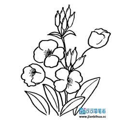 花卉简笔画图片大全 有象征意义的花草简笔画图片大全 可可