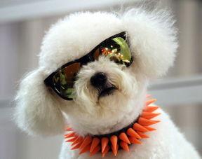禁眼-泰国民俗 狗在泰国是禁忌图案 时髦动物戴眼镜照吸引眼球