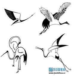 丹顶鹤的拍摄方法