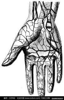 血管连起来可绕地球三圈 关于人体的奇迹