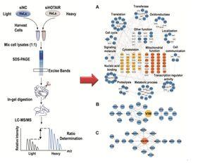 长链非编码RNA的分子作用机制研究方面取得重要进展