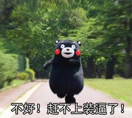 ...微信超火爆熊本熊表情包下载 -微信超火爆熊本熊GIF表情包下载 熊本...
