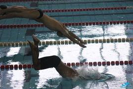 洛阳全国成人游泳锦标赛,照片 大量滴 注意更新