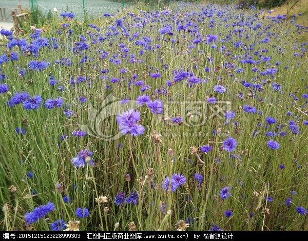 DIY蓝色玫瑰花艺