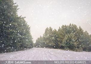 茂密树林与飘着雪花的天空高清图片