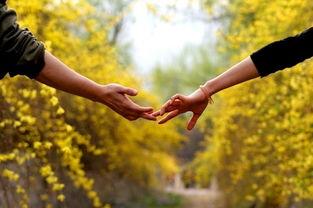 关于爱情的优美句子 形容爱情幸福的句子