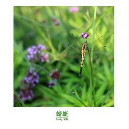 春天是花的季节夏天是虫子的乐园夏日有蜻蜓,有蜜蜂,还有其他的飞...