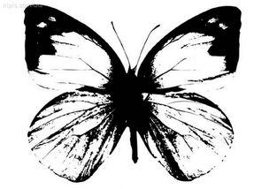 黑白蝴蝶图片