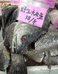 紫枯鱼人-百斤大米鱼 1次100人来吃也不一定吃得完(组图)米鱼,一作鮸鱼(...