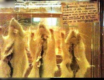 畸骨-毛骨悚然 收藏畸形人遗体的最恐怖尸体博物馆