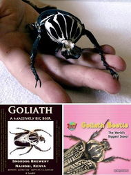 异脉者-在非洲暗无天日的丛林中生存着目前地球上最大的昆虫:歌利亚甲虫....