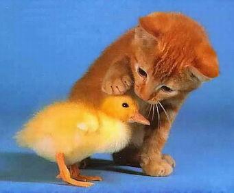 老鼠爱上猫 超搞笑