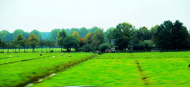 车拍荷兰田园风光