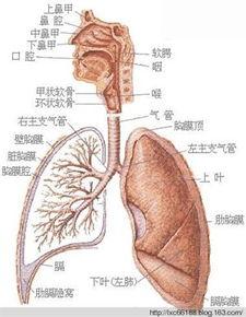 男女身体解剖图 应该了解自己的身体结构