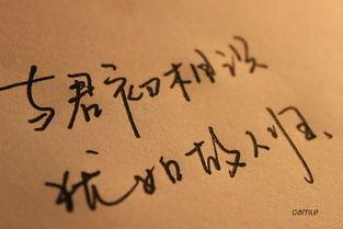 纯手写QQ文字图片 最懂的人 最暖的伴 2