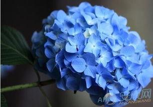 寓意爱情永恒的花语!