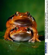 一只偷吃禁果的青蛙