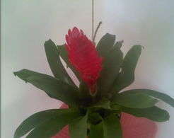 ...问这个花叫什么名字 -同问中国花卉网