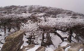 群山叠嶂,苍翠无涯,雪色苍茫.   1 原始森林2 冰川遗迹3 冰晶顶峰4 ...