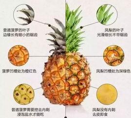 凤梨是菠萝吗 居然有区别