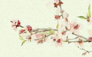 描写鲜花的诗句-这首诗共分为三章,每章四句.分别以桃花,桃果,桃叶起兴,来引出...