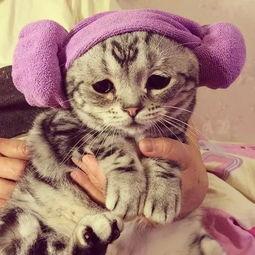 我要操逼图-委屈猫走红 网友大呼