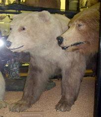 自然探索 世界上十大著名杂交动物