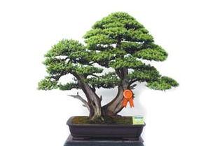 2006中国盆景赏石博览会获金奖盆景作品欣赏