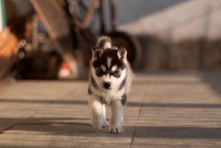 萌死人的可爱小狗狗图片-可爱小狗 狗狗 卡通 小狗