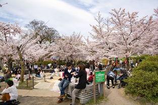 日本京都赏樱攻略 京都樱花季,赏樱攻略