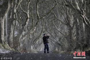 ...尔兰安特里姆,黑暗树篱大道.图片来源:视觉中国-全球最奇特树木...
