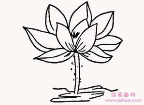 开花的荷花简笔画图片