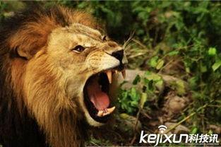 人与动物的战争 男子挑衅狮子大喊咬我啊 动物世界,人与动物 中国...