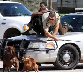 遇见一名黑人遭2只恶狗穷追,于是立即将警