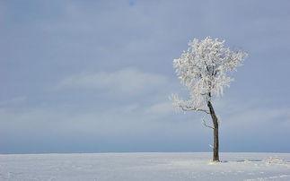 朋友圈关于雪的唯美句子