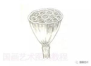 图文教程 工笔荷花画法之花苞 莲蓬
