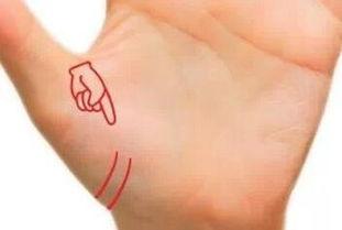 明灵巧的人会有两根智慧线.快看看你手没有~~~