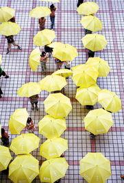 雨伞花-昨天上午,拱墅交警将50把平安伞送到大关小学,让学生们在下雨天可...