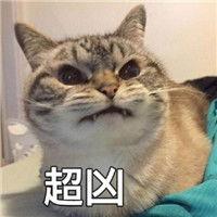表情 网红猫咪超凶表情包大全猫咪超凶巨凶宇宙最凶表情包 云海软件...